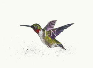ruby throated hummingbird 2016